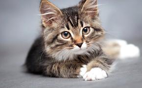 Picture cat, muzzle, lies, kitty, bokeh