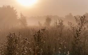 Picture Fog, Autumn, РасСвет