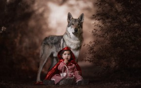 Wallpaper forest, look, face, red, pose, the dark background, grey, mood, basket, wolf, child, the situation, ...