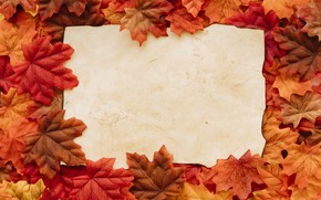 Picture autumn, leaves, background, colorful, background, autumn, leaves, autumn, maple