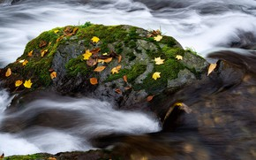 Picture autumn, water, stones, moss, pond, autumn leaves