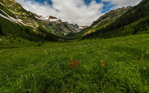 Picture greens, landscape, flowers, mountains, nature, beauty, meadow