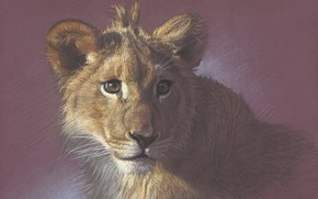 Picture portrait, painting, lion, drawing with colored pencils