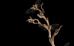 Picture dark, night, branches, insect, natura, dragonflies