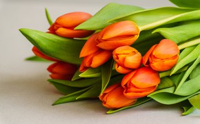 Picture flowers, bouquet, tulips, fresh, flowers, beautiful, romantic, tulips, orange, spring