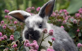 Picture flowers, rabbit, meadow