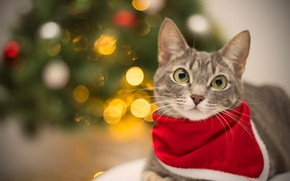 Picture cat, cat, look, face, red, lights, grey, background, holiday, portrait, floor, New year, lies, headband, ...