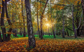 Picture Autumn, Trees, Forest