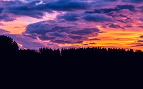 Picture forest, clouds, sunset, glow