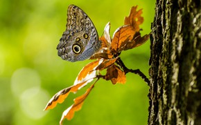 Picture leaves, tree, butterfly, branch, bokeh
