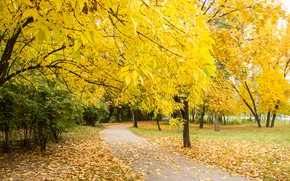 Picture autumn, leaves, trees, Park, trail, nature, yellow, park, autumn, leaves, tree, path