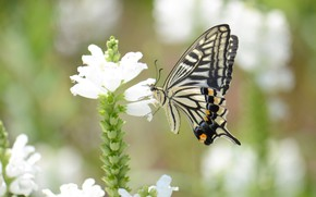 Picture flower, background, butterfly