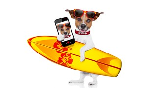 Picture photo, photoshop, humor, glasses, white background, surfing, Board, smartphone, selfie, Jack Russell Terrier