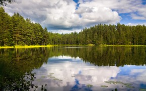 Picture greens, forest, the sky, water, clouds, trees, lake, reflection