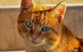 Picture cat, cat eyes, cat face