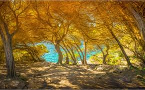 Picture sea, trees, Italy, Sardinia