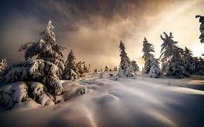 Picture winter, snow, trees, landscape, nature, morning, Christmas trees, Robert Didierjean