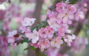 Picture branches, tree, flowering