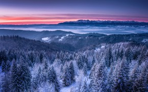 Picture winter, snow, landscape, mountains, nature, morning, forest, dawn