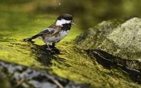 Picture background, bird, bird