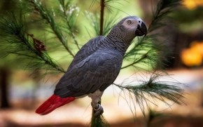 Picture bird, branch, parrot, bokeh, Jaco