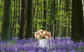 Picture forest, white, flowers, bike, glade, roses, bouquet, pot, flowers, stand, lilac