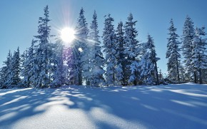 Picture winter, frost, forest, the sky, the sun, rays, light, snow, landscape, nature, blue, blue, winter, …
