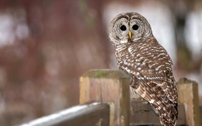Picture look, background, nature, columns, owl, motley, bokeh, bird, the fence, owl