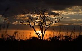 Picture sunset, tree, the evening, Tanzania