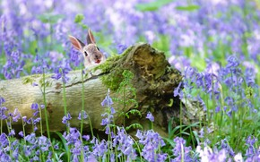 Picture flowers, nature, hare, log