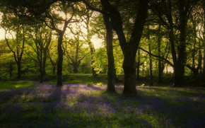 Picture forest, rays, spring