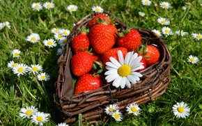 Picture greens, summer, flowers, berries, glade, heart, chamomile, harvest, strawberry, red, white, network, composition, Victoria, Daisy
