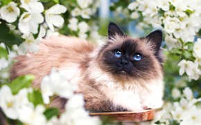 Picture cat, flowers, spring, muzzle, fluffy