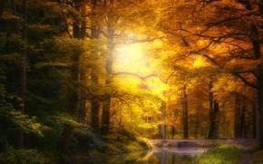 Picture autumn, forest, pond, Park, foliage, pond, Golden autumn