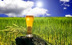 Wallpaper clouds, horizon, glass, the sun, summer, field, beer, bokeh, spikelets, stone, grass, the sky