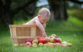 Picture grass, apples, baby, child