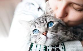 Picture cat, cat, look, girl, love, portrait, kiss, blue eyes, mistress, handsome, pet