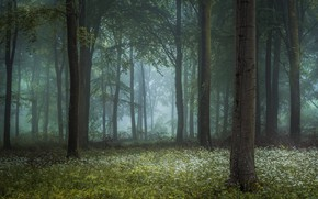 Picture forest, grass, fog, photo, tree