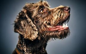 Picture face, background, portrait, dog, profile