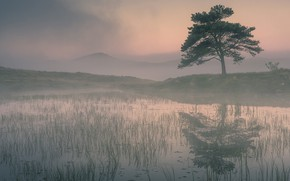 Picture algae, fog, lake, pond, reflection, hills, shore, swamp, morning, early, pond, pine, alone, derea