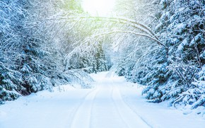 Picture winter, road, snow, trees, branches, track, white, snow, tree, branches in the snow