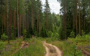 Picture road, forest, detonation