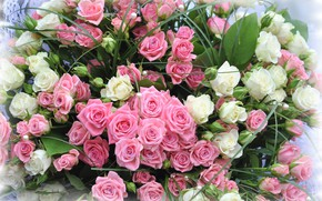 Picture roses, bouquet, white roses, pink roses