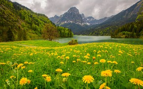 Picture forest, flowers, mountains, lake, meadow, dandelions