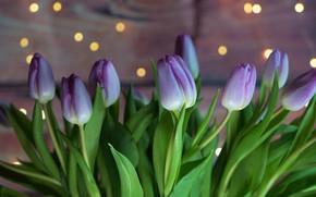Picture bouquet, tulips, lilac, bokeh