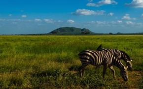 Picture greens, field, grass, clouds, light, landscape, nature, blue, two, mountain, hill, Zebra, Savannah, Zebra, blue …