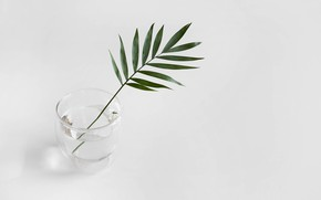 Picture water, glass, sprig