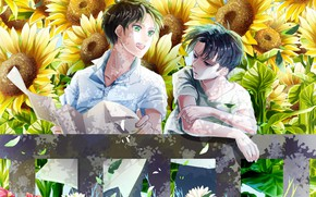 Picture sunflowers, Attack On Titan, Shingeki No Kyojin, Eren Yeager, Attack of the titans, corporal Levi, …