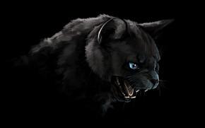 Picture cat, cat, look, face, figure, portrait, Panther, art, mouth, fangs, grin, black, black background, blue …