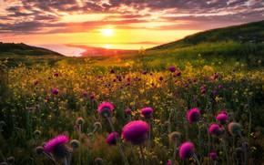 Picture Flowers, Sea, Coast, Hills, Oset